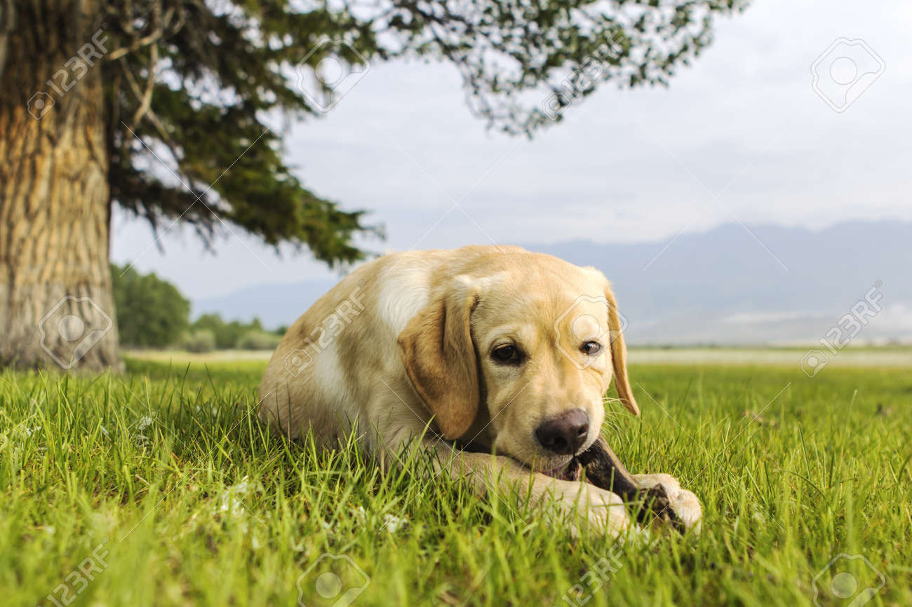 The young dog lies on grass under tree with stick in teeth Stock Photo - 15524672