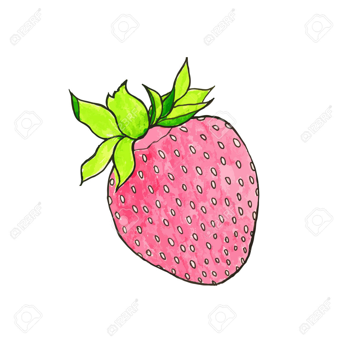 strawberry hand drawn berry real watercolor drawing vector rh 123rf com