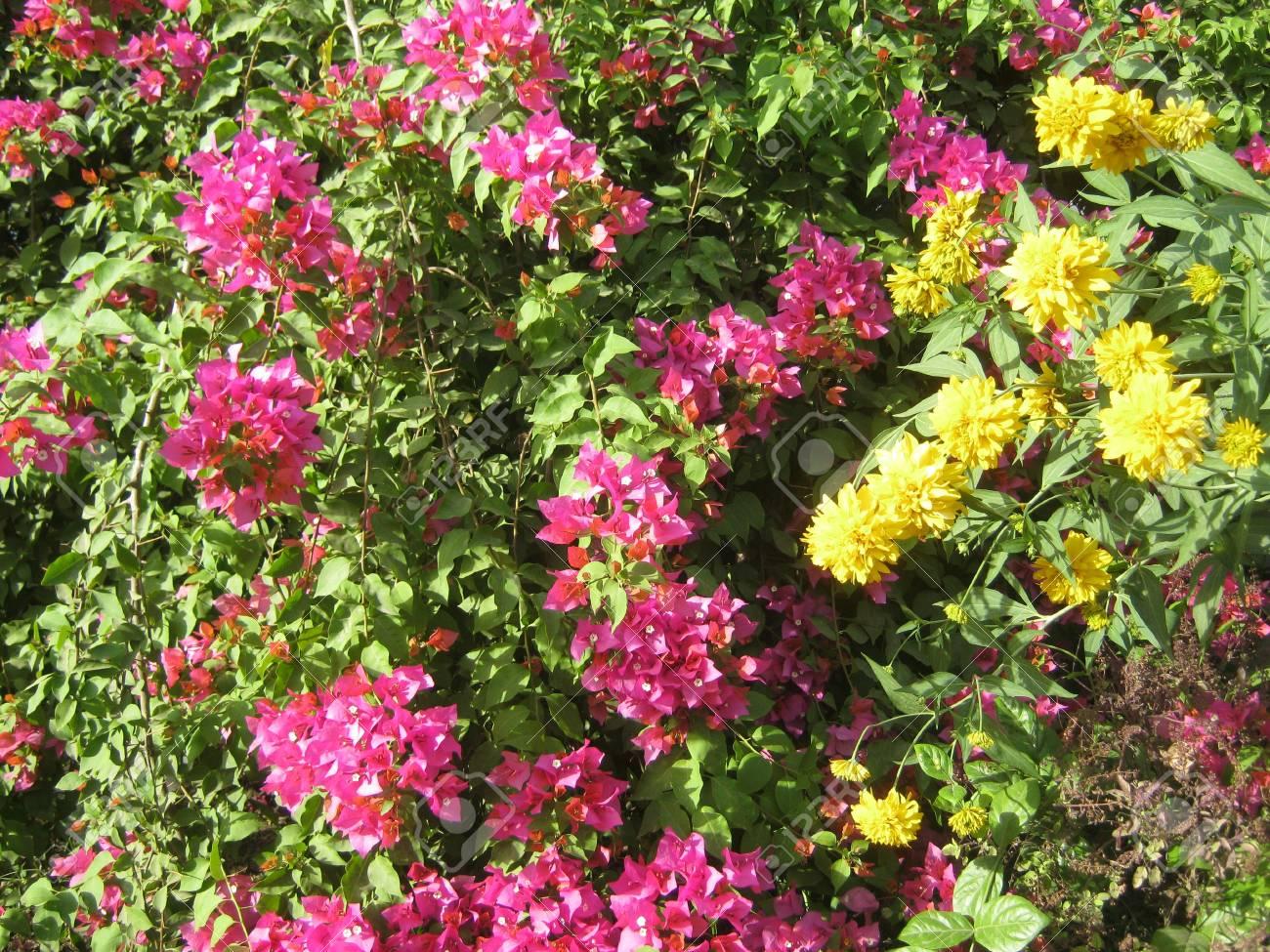 Bella giardino colorato foto royalty free immagini immagini e