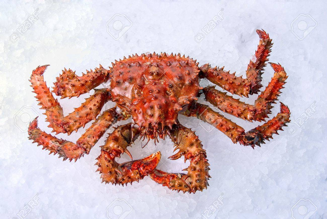 Giant King Crabs King Crab on a White Ice