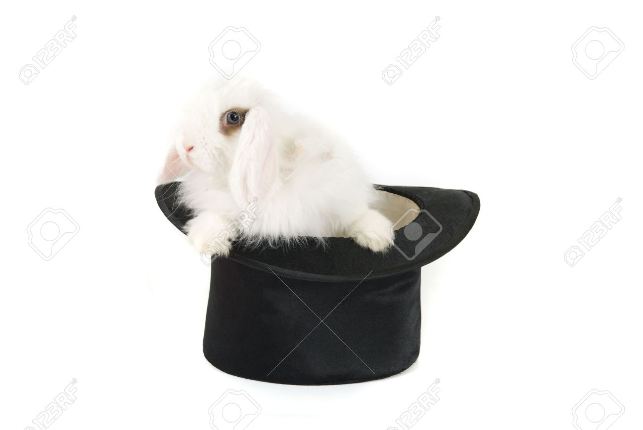 White bunny at black hat isolated on a white background Stock Photo - 6397919