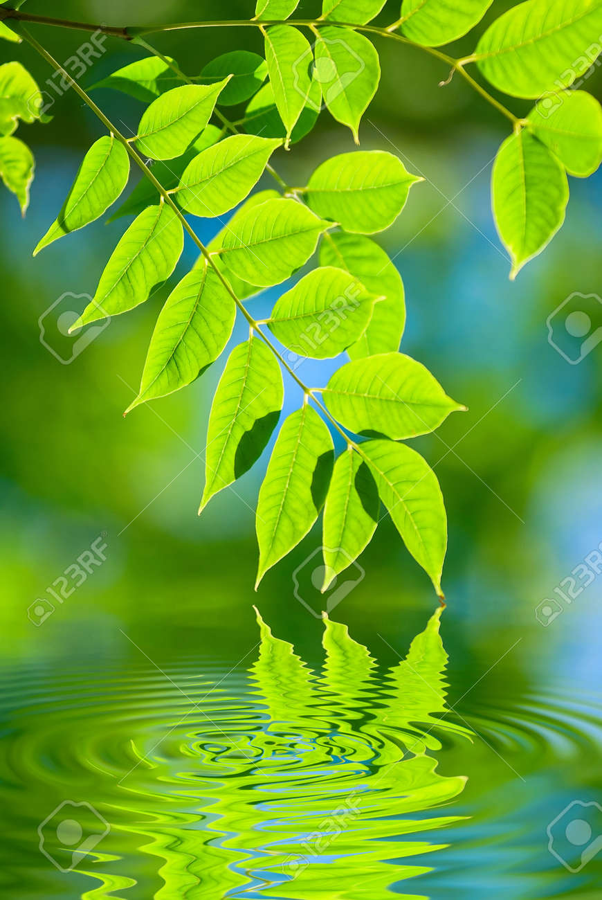 green leaves reflecting in the water, shallow focus Stock Photo - 7699911