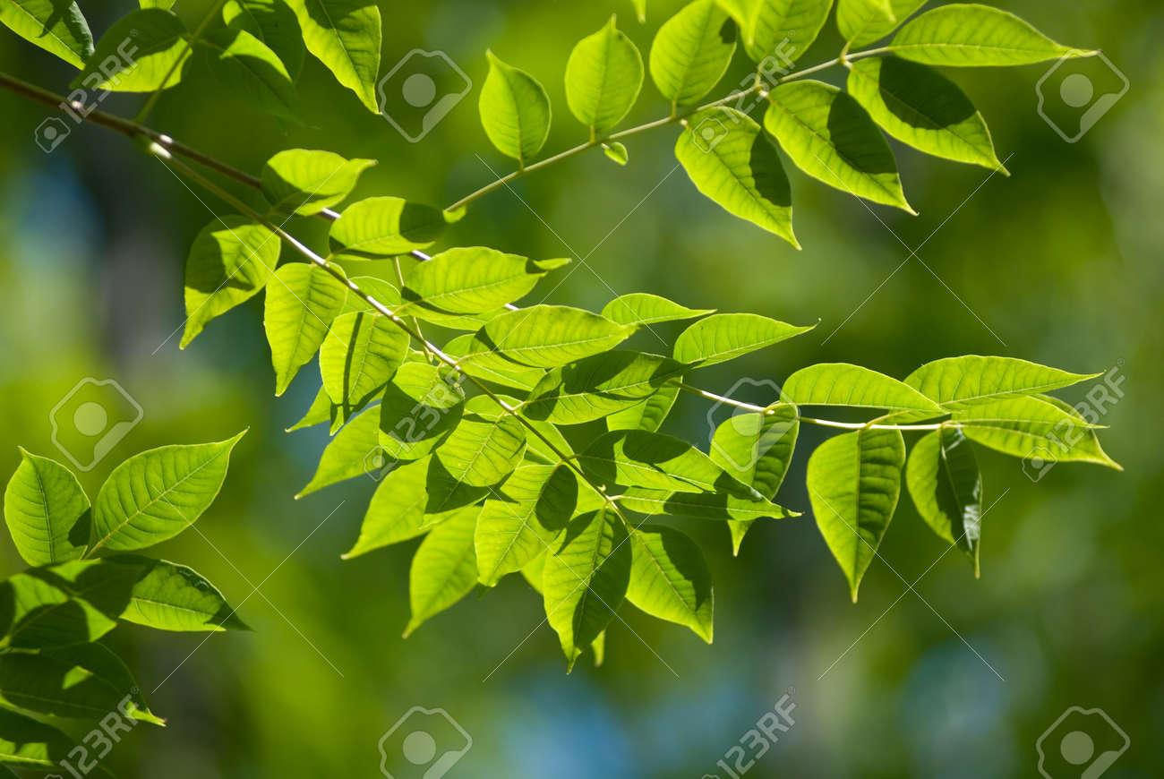 Beautiful green leaves make pattern background Stock Photo - 7753654