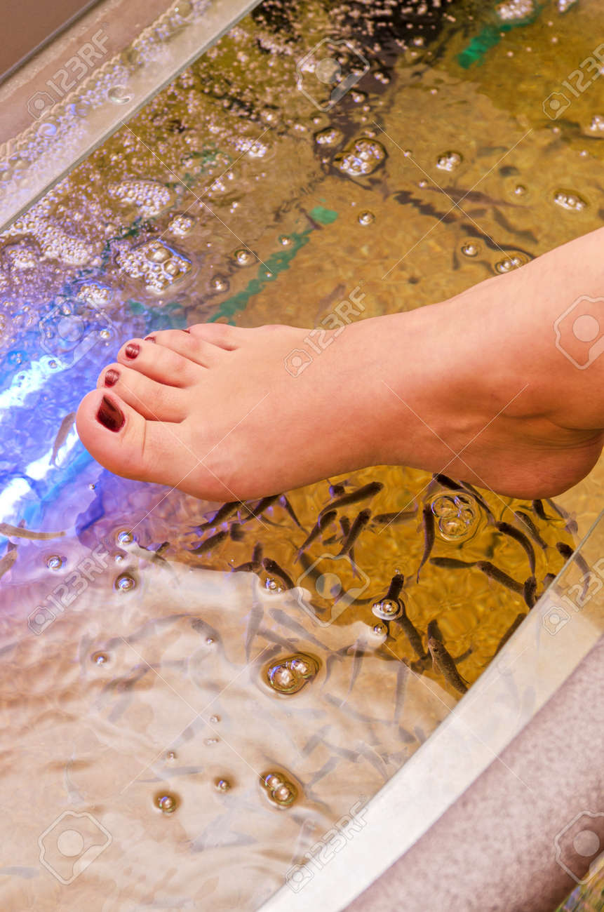 Fish spa pedicure wellness skin care treatment Stock Photo - 13210560