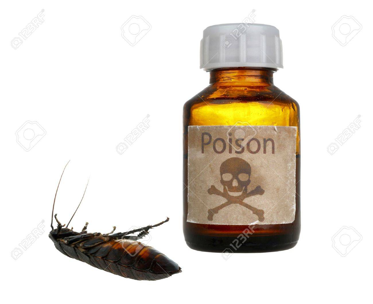 old bottle of poison and dead cockroach isolated on white background Stock Photo - 12076545