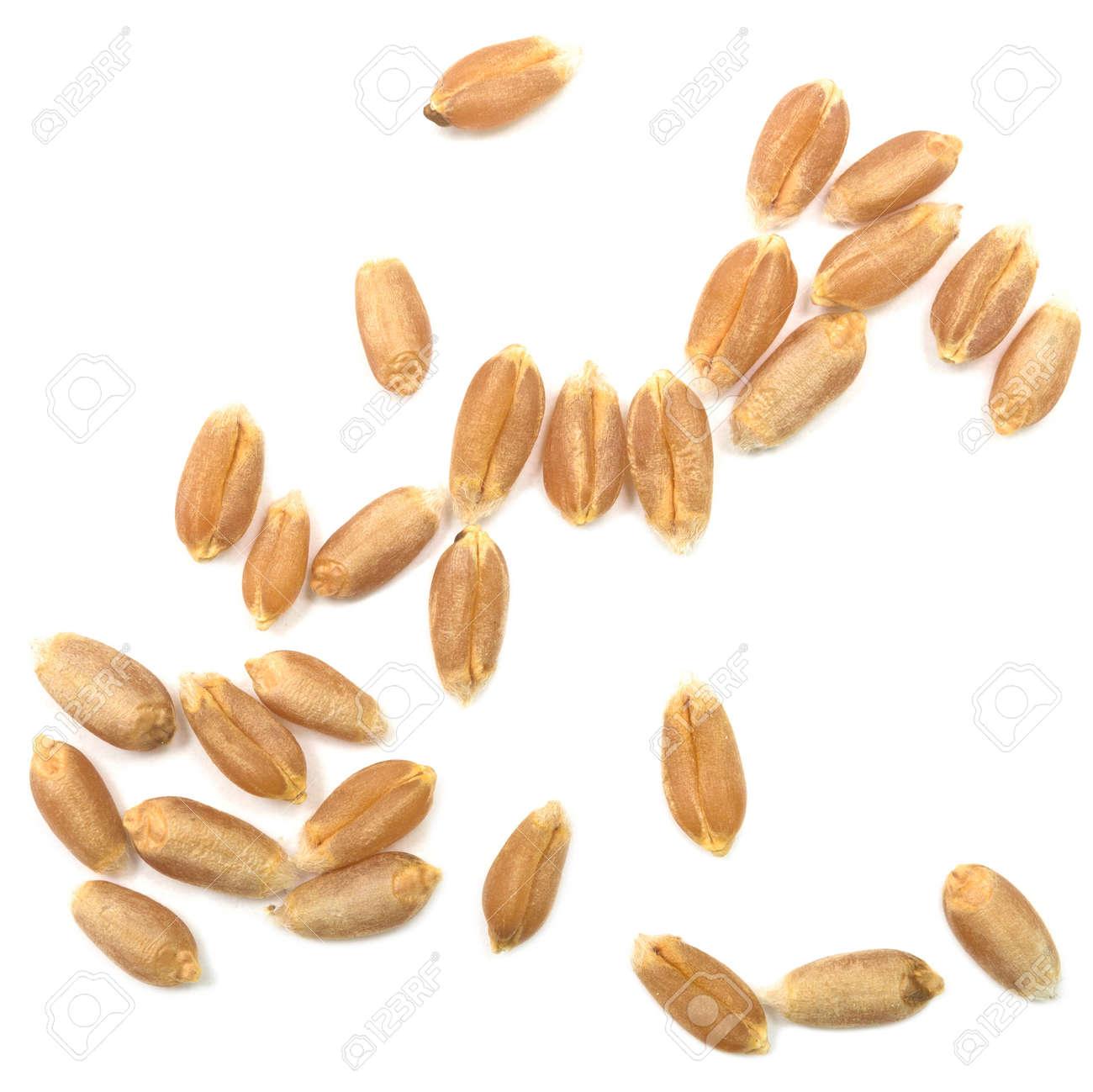 wheat grain isolated on white background Standard-Bild - 35230180
