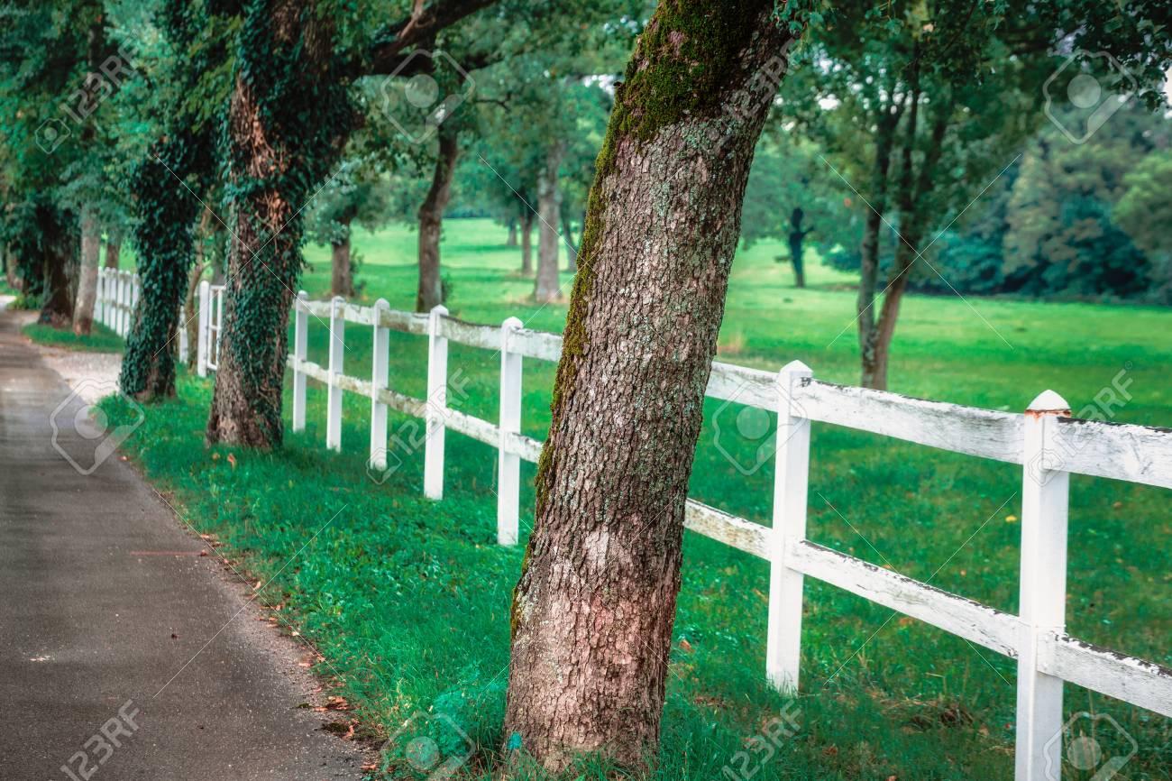 gasse mit alten bäumen. weißer zaun und grünes feld. lizenzfreie