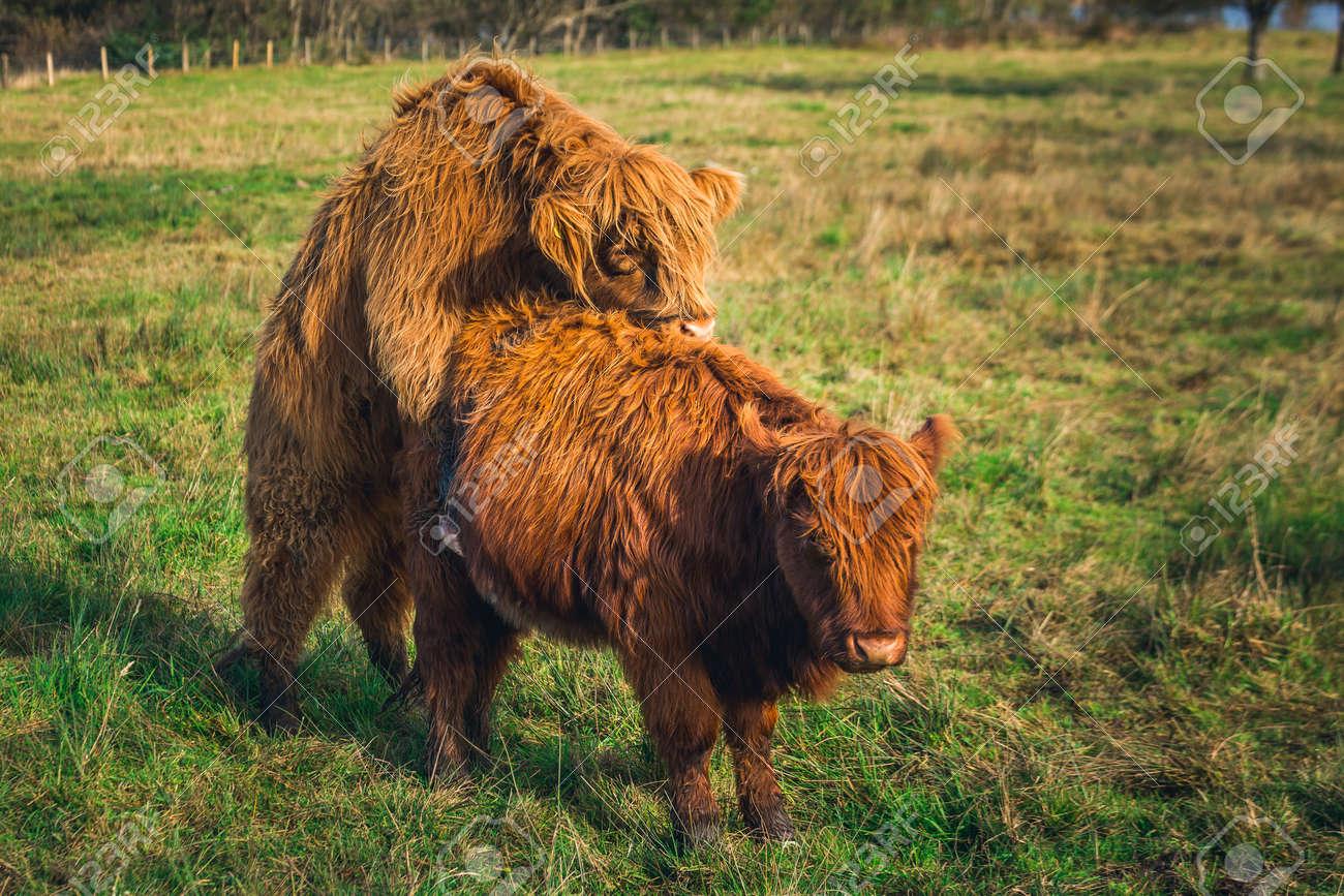 Highland sex