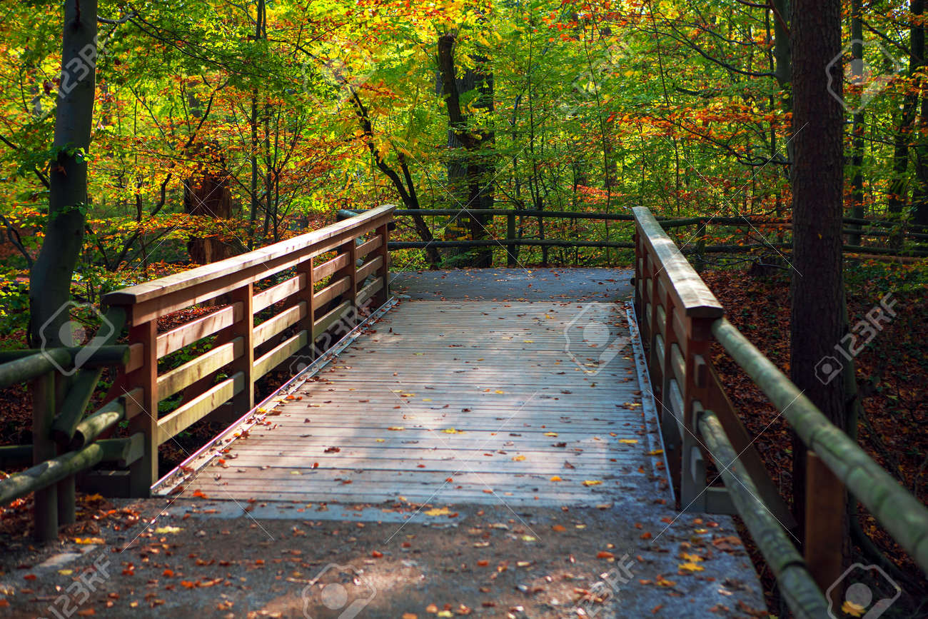 Wooden footbridge in autumn park . Walking in fall season nature - 156791355