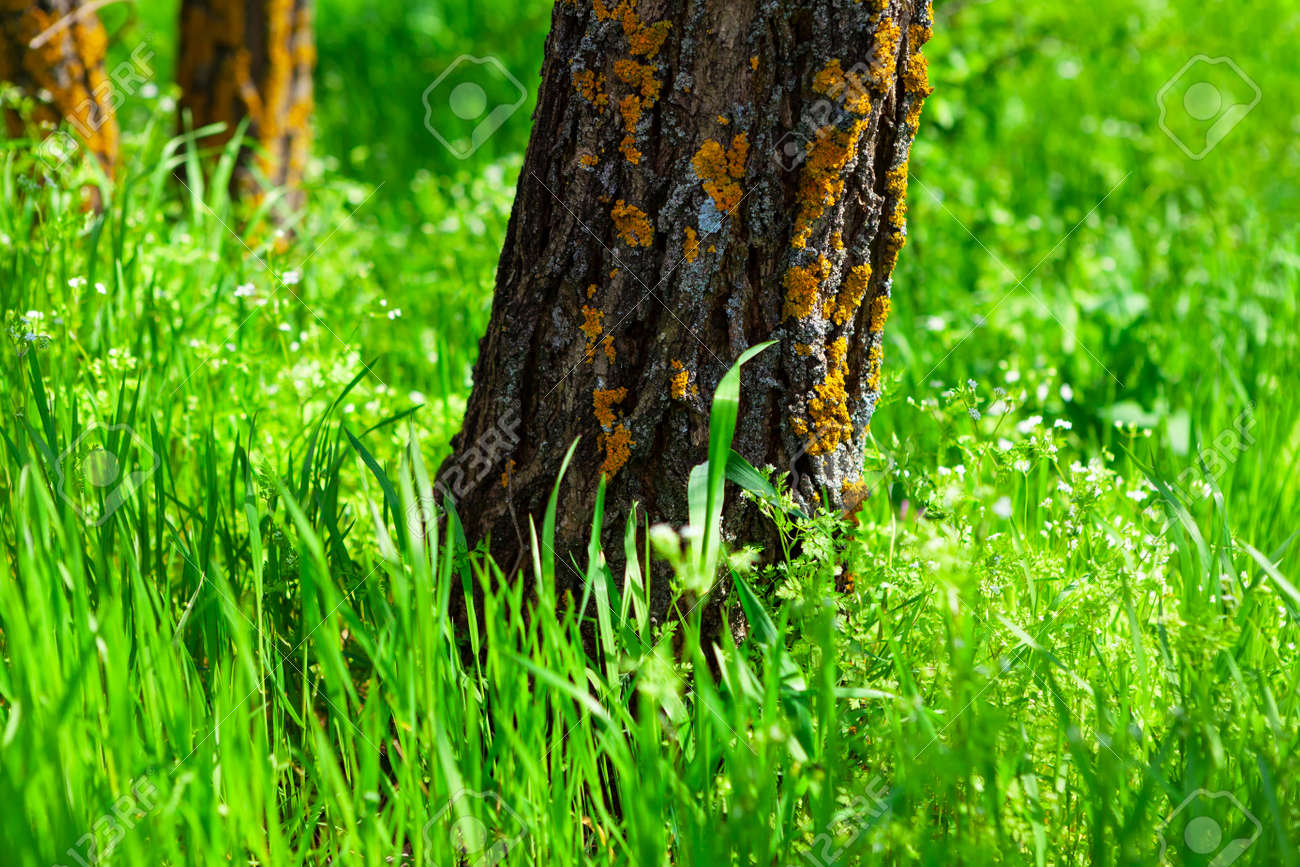Tree trunk and green grass in the sunlight . Natural spring scenery - 169398963