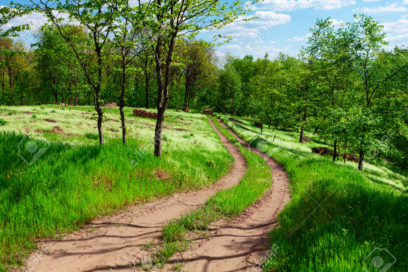 Country road in the forest . Green meadow and trees in the springtime . Walking into spring nature - 169399007