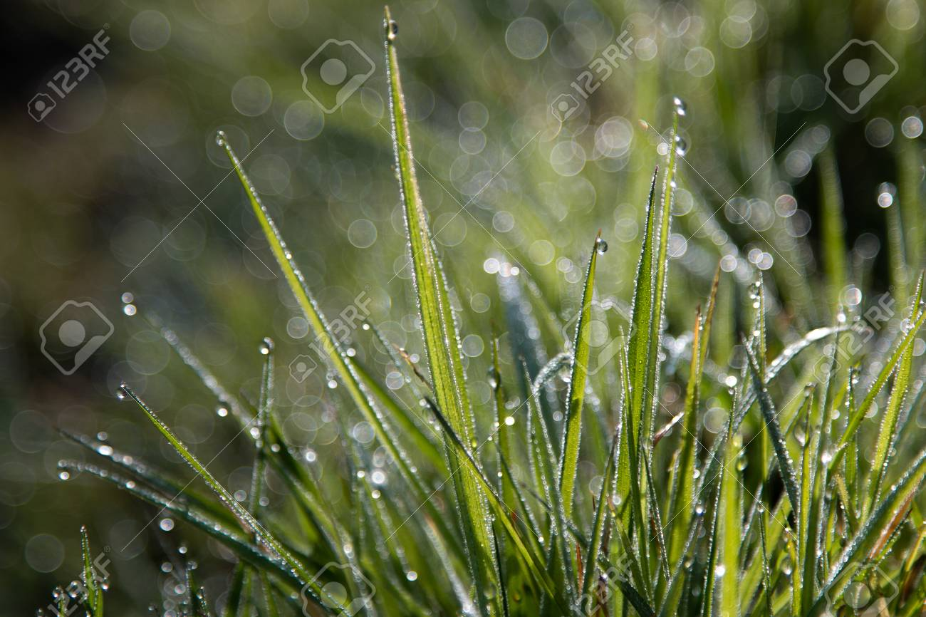 early morning dew on grass, background, wallpaper stock photo