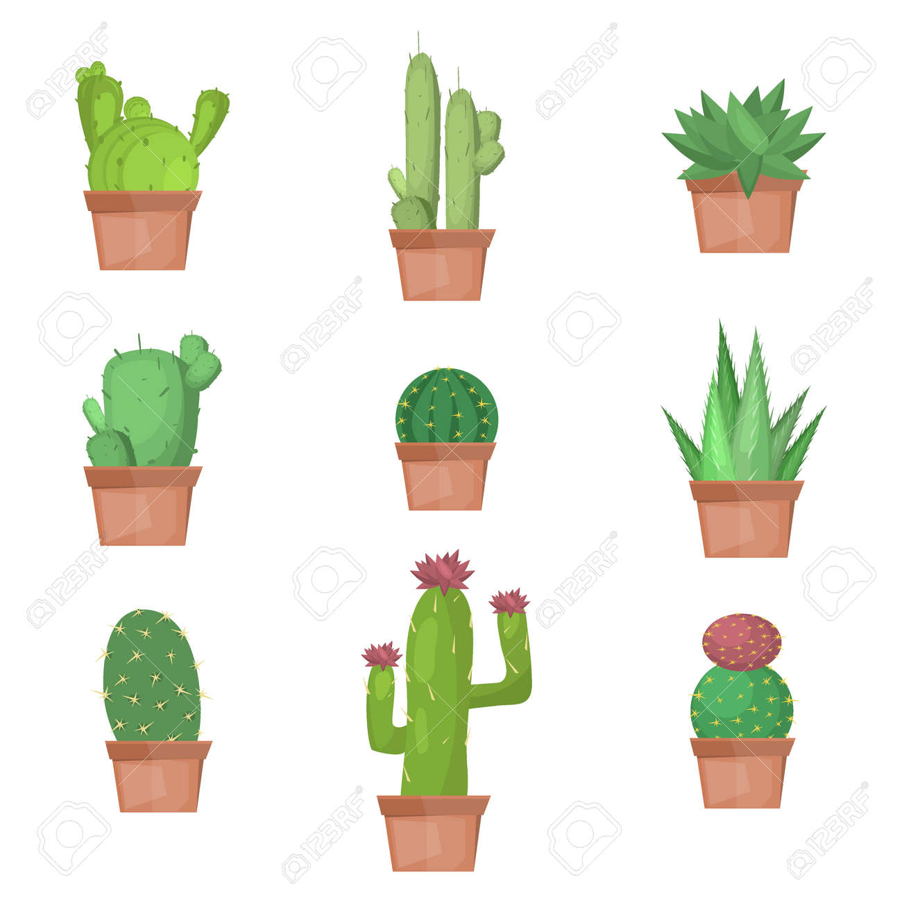 Cactus collection illustration. Cactus nature plant desert isolated mexico tropical art. Cactus nature plant succulent set. Tropical art cactus collection. Mexican cactus graphic botany cactus. - 56479213