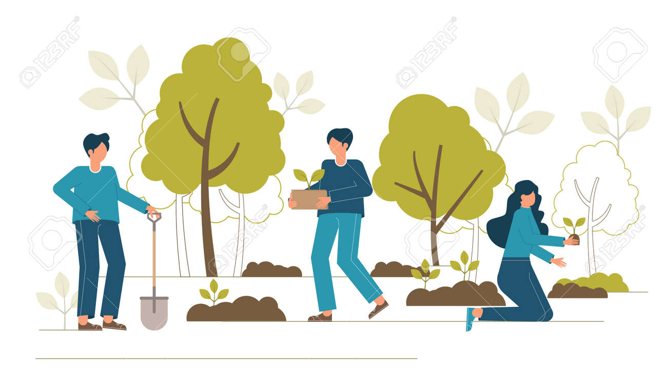 Reforestation concept. Forest restoration, reforestation planting trees, environment day. - 146965981