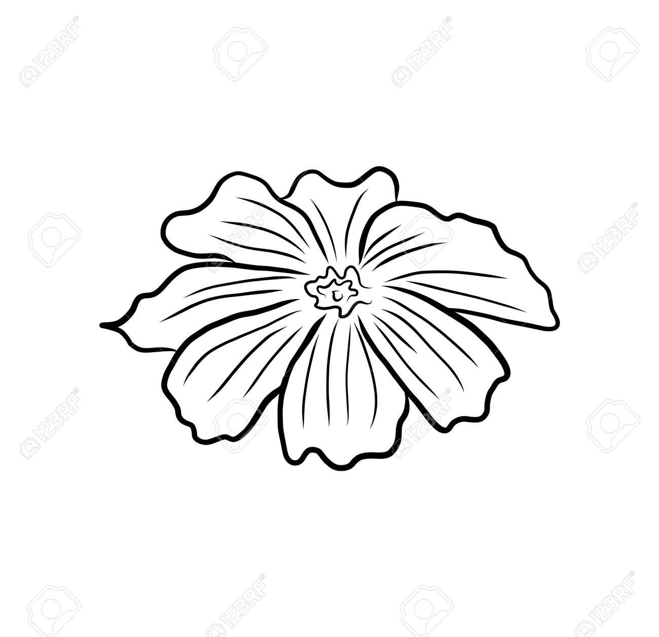 Hand-drawing floral background. Line art flower - 172399450