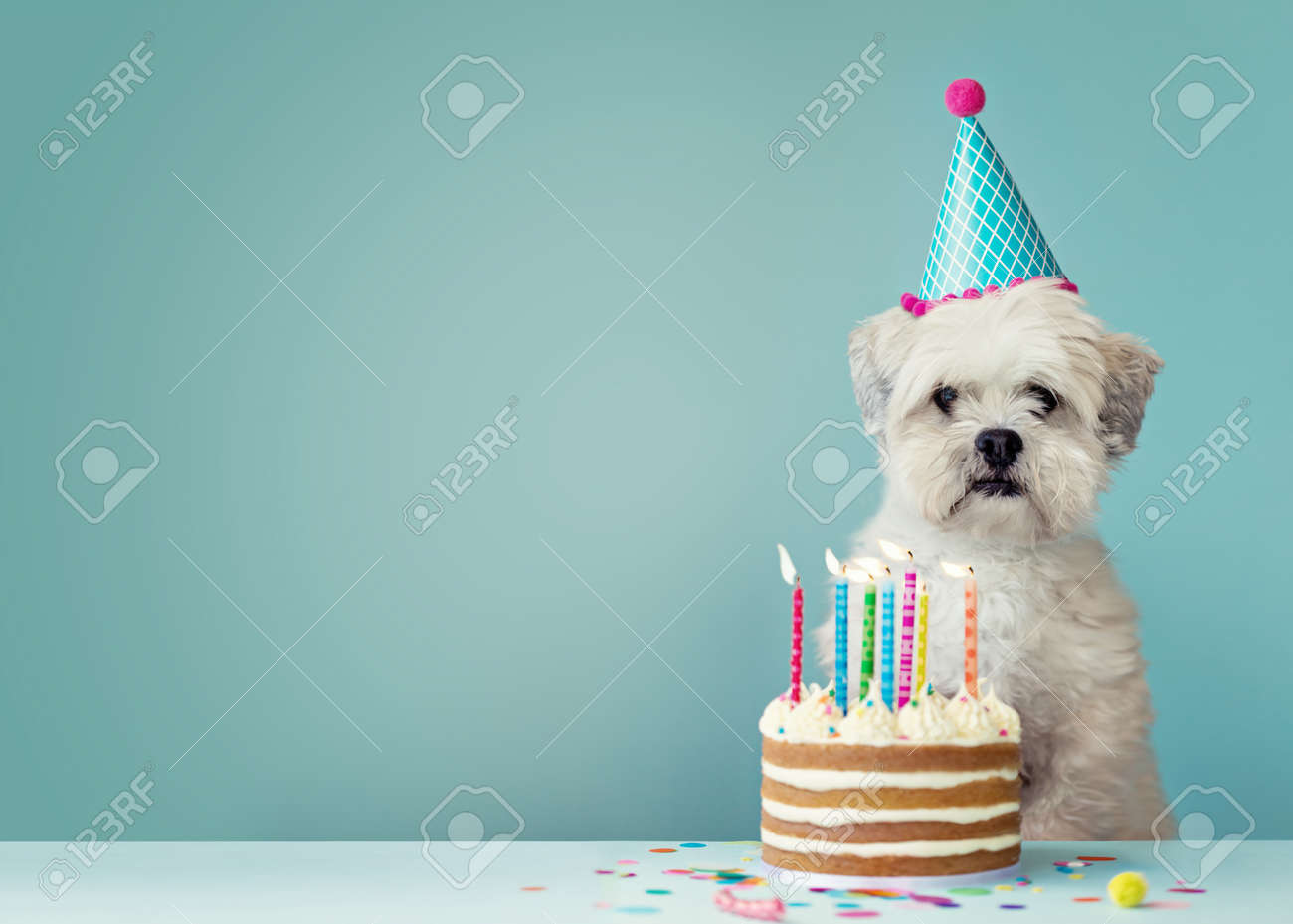Cute dog with party hat and birthday cake - 85507154