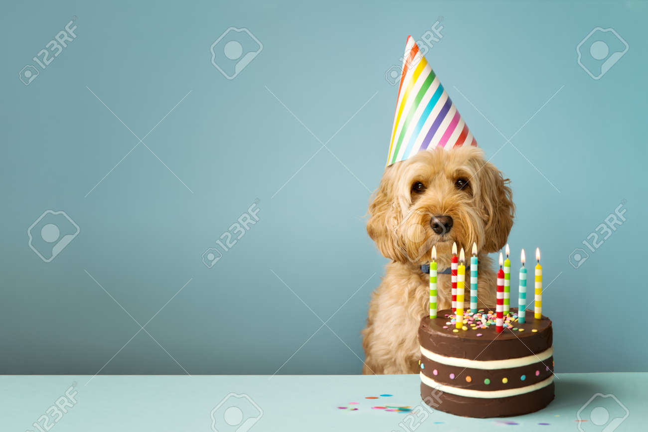Superb Cute Dog With Party Hat And Birthday Cake Stock Photo Picture And Funny Birthday Cards Online Ioscodamsfinfo