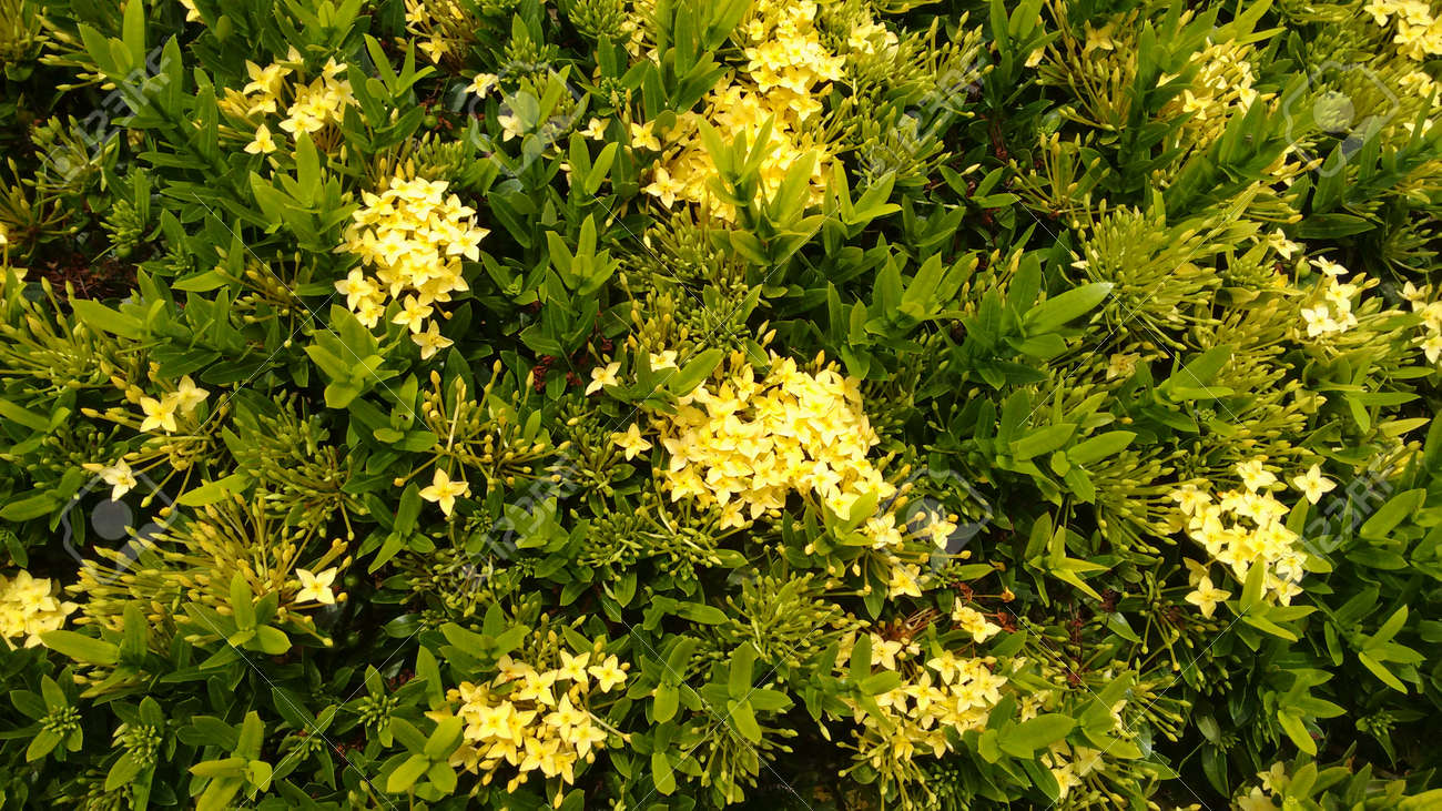 Plants With Yellow Flowers Stock Photo Picture And Royalty Free