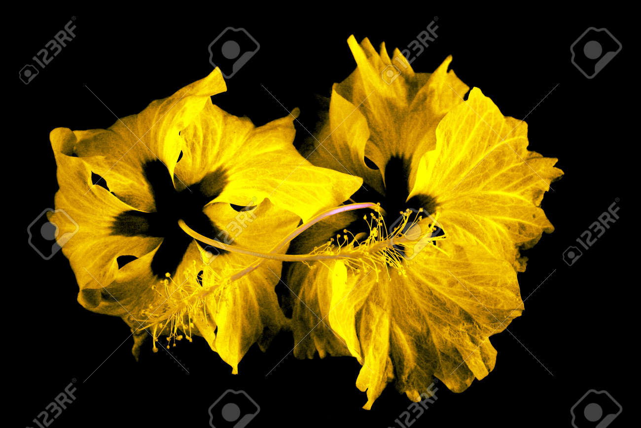 Fantastic flowers abstract as a nice background. Stock Photo - 1628708