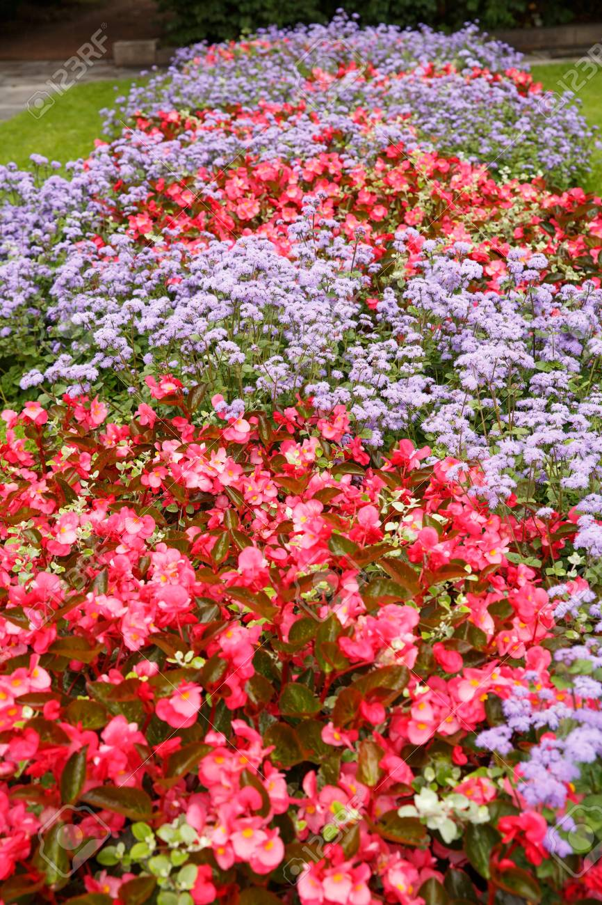 Colorful Flowers In The Park In Oslo, Norway. Stock Photo, Picture ...