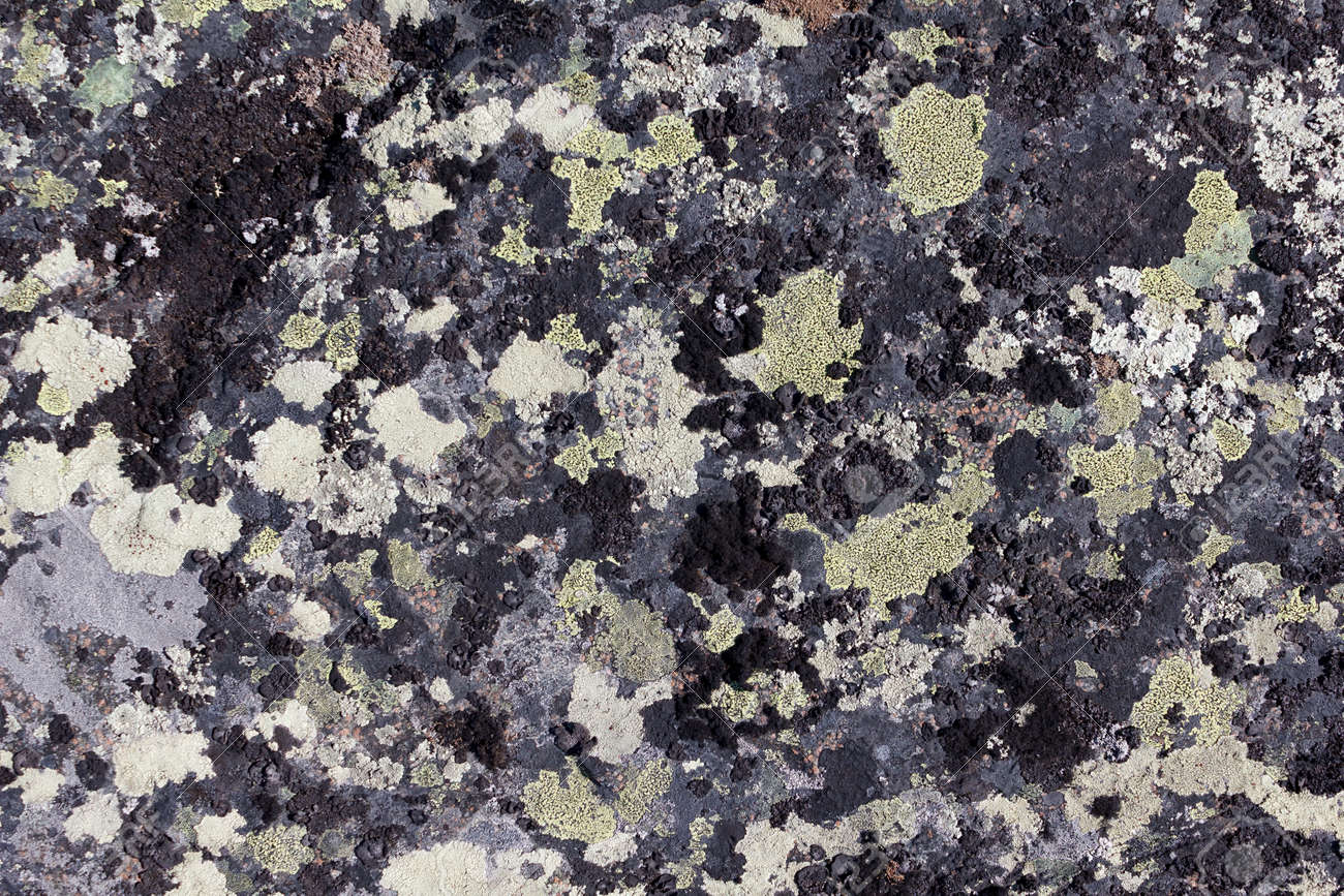 Lichen on granite stone background Stock Photo - 9584740