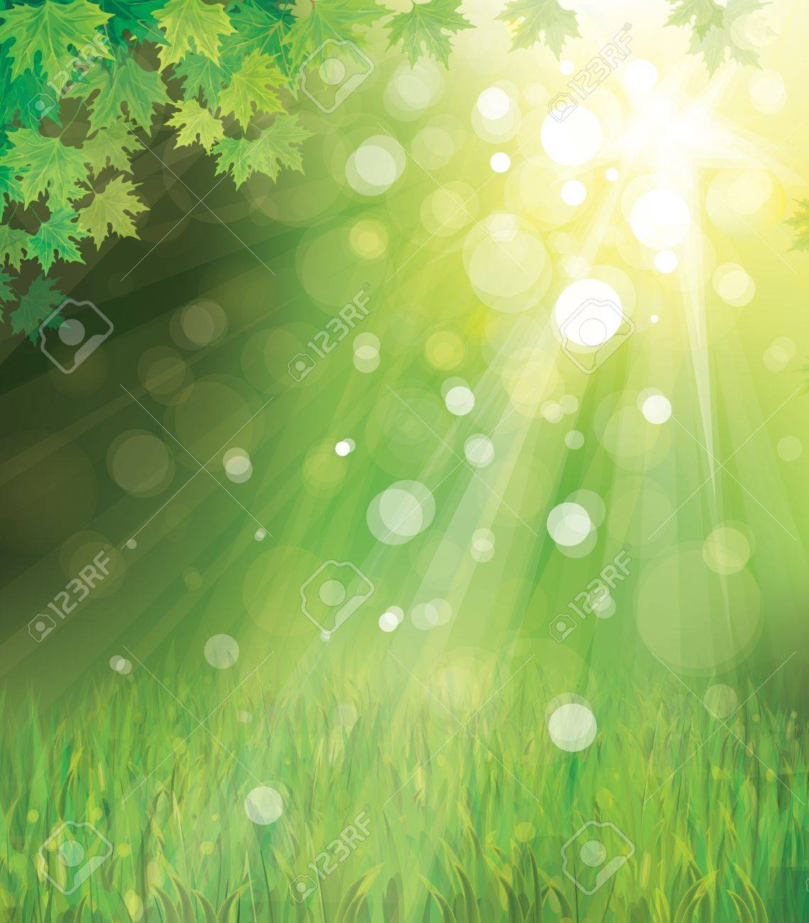 Vector of green leaves on sunny  background Stock Vector - 17776976