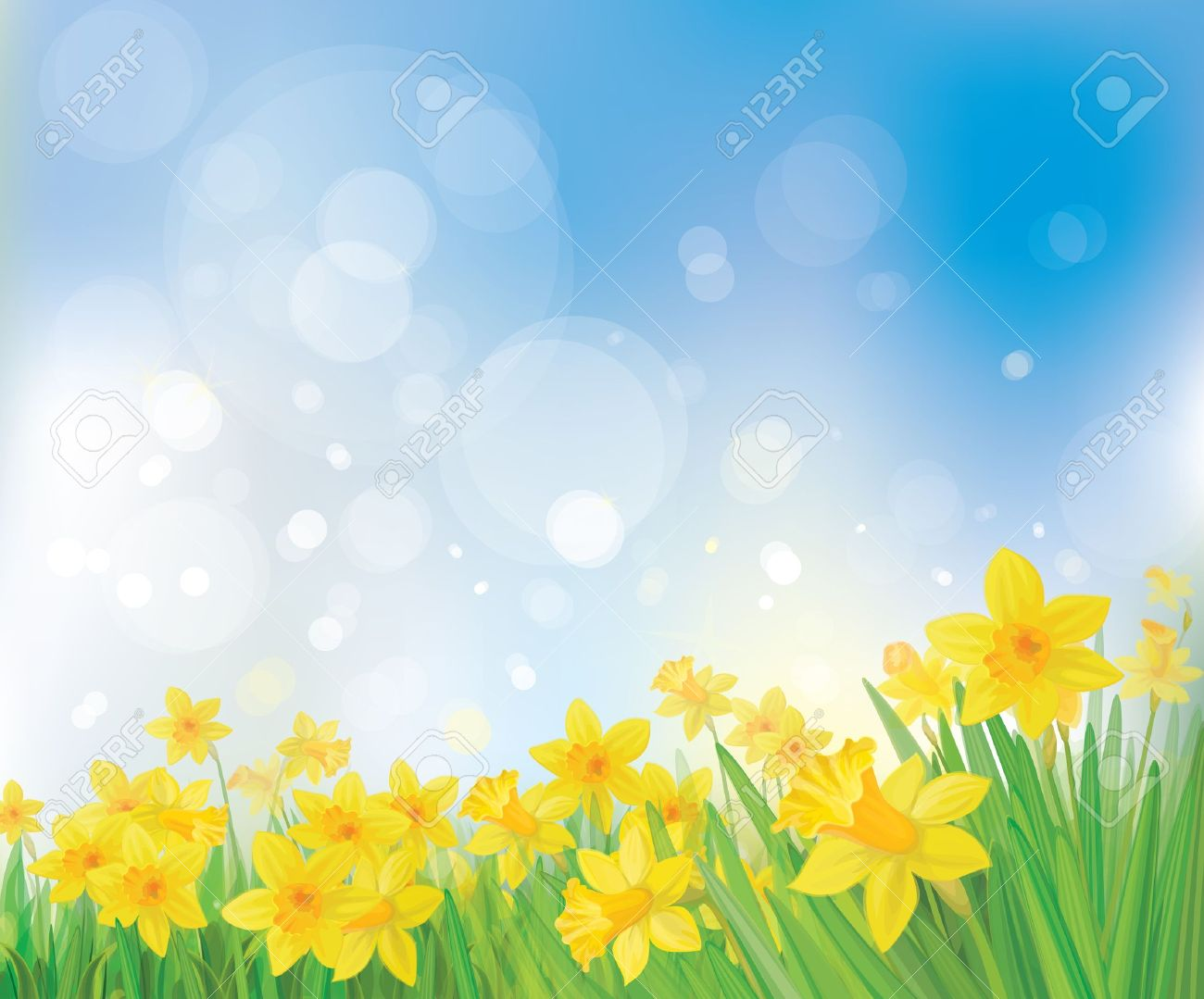 vector of daffodil flowers on spring background royalty free