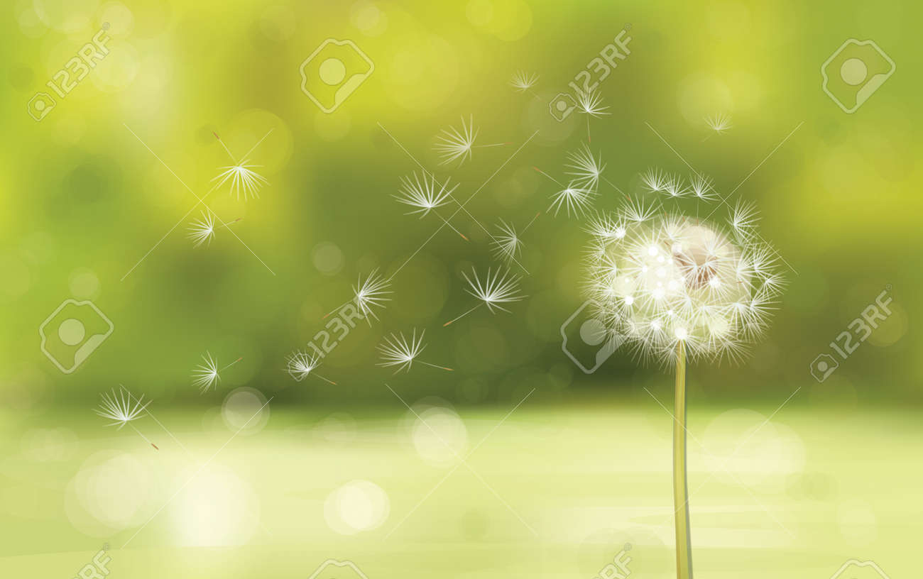a93be3e30ec6d Vector Of Spring Background With White Dandelion. Royalty Free ...