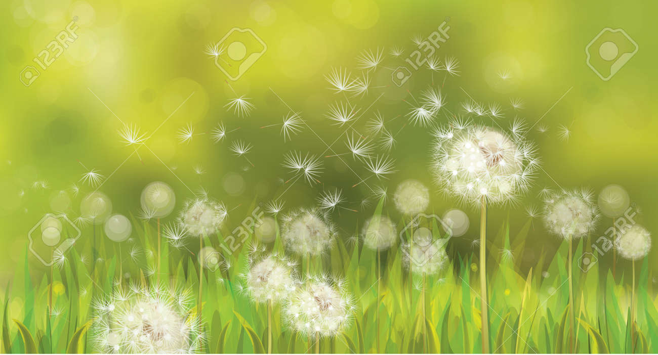 17157857a598c Vector Of Spring Background With White Dandelions. Royalty Free ...