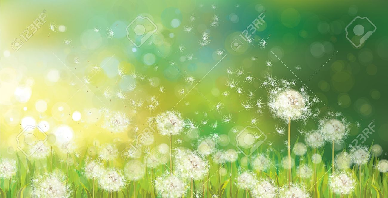 27240c139b53a Vector Of Spring Background With White Dandelions Royalty Free ...