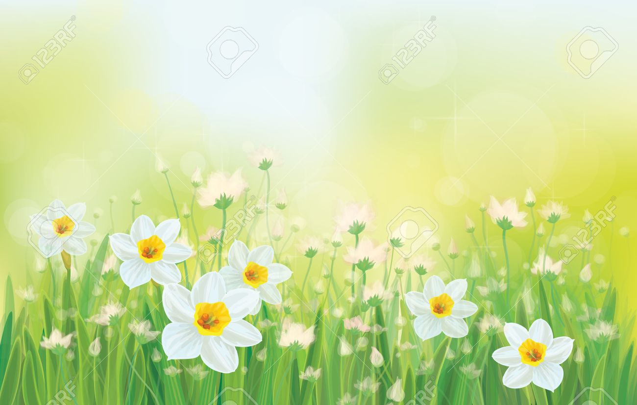 Vector daffodil flowers on sky background. Stock Vector - 24558844
