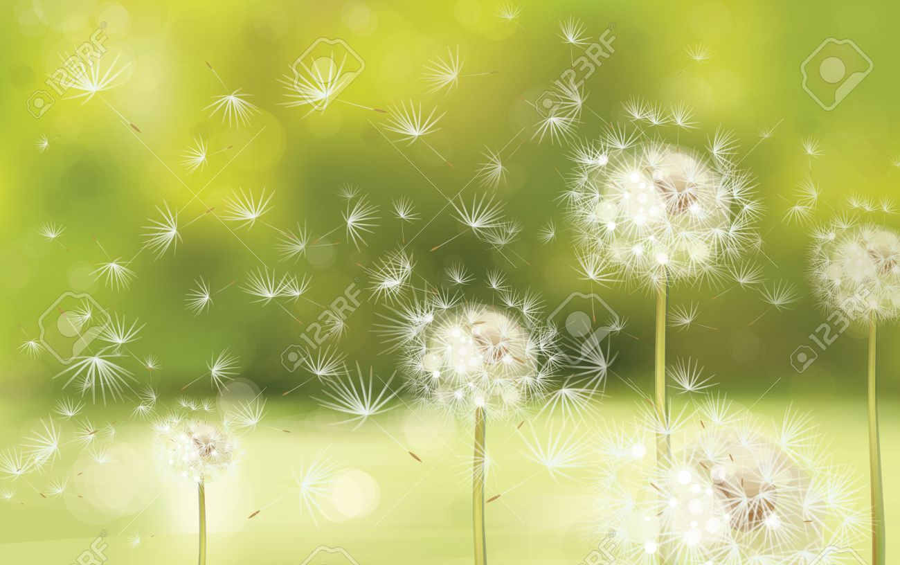 5b087a0965ebb Vector Spring Background With White Dandelions Royalty Free Cliparts ...
