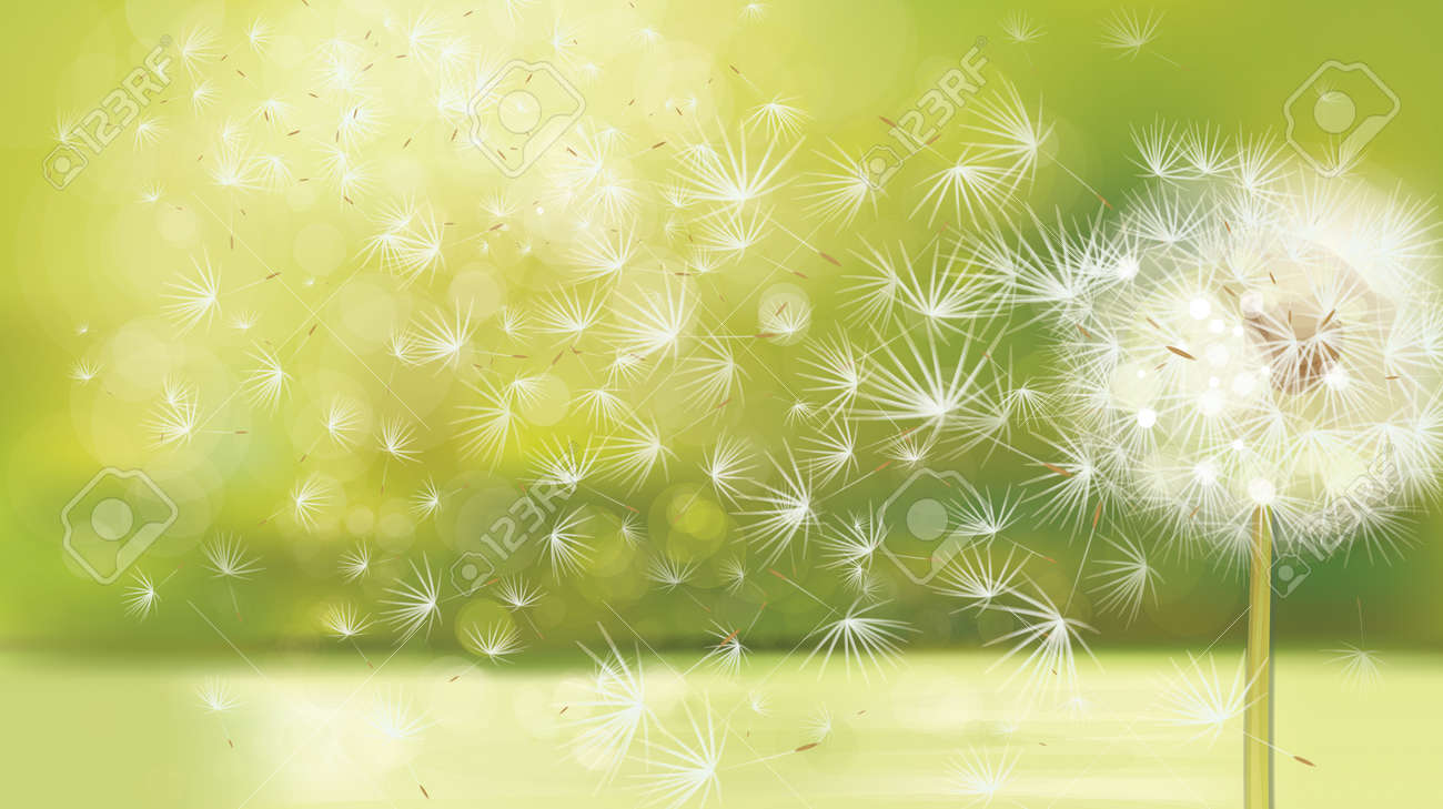 4448828b1531e Vector Spring Background With White Dandelion. Royalty Free Cliparts ...