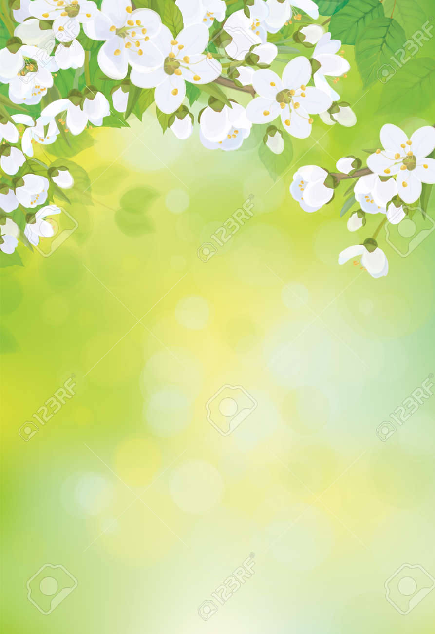 Vector spring blossoming tree on bokeh background. - 34815844
