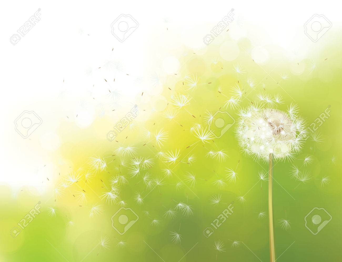 Vector spring bokeh background with white dandelion. - 34815847