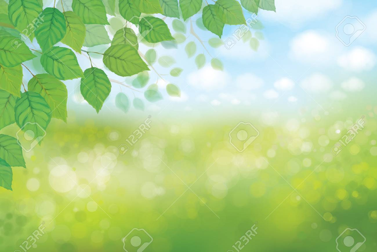 Vector nature background. - 37489572