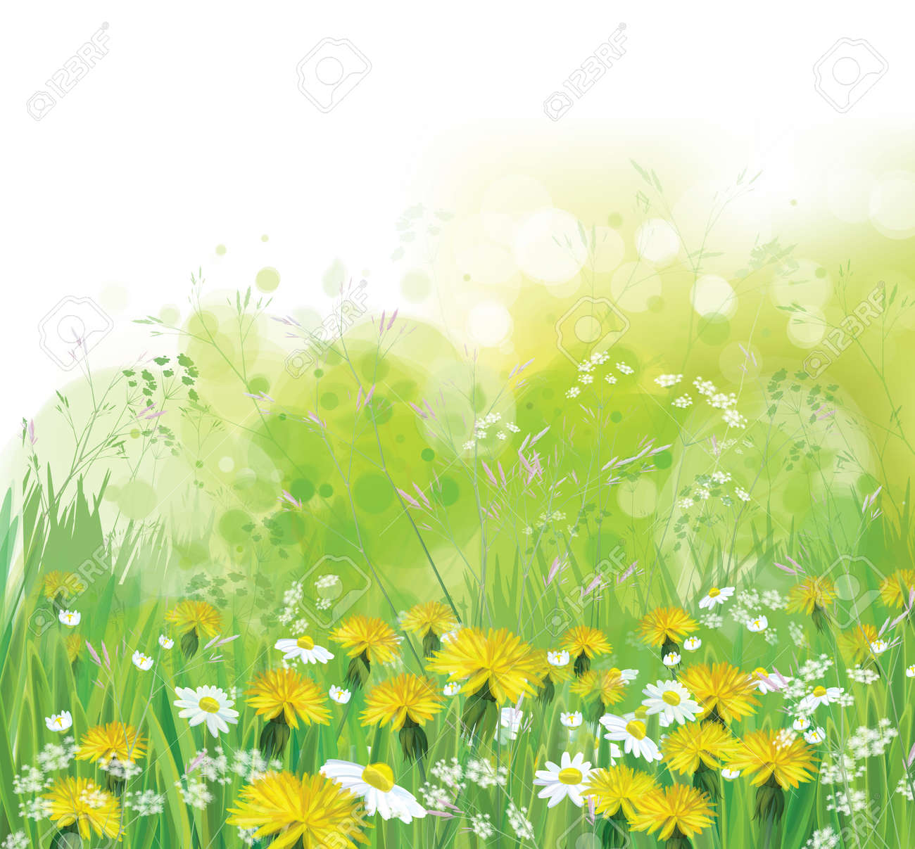 Vector spring, nature background with chamomiles and dandelions. - 52477595