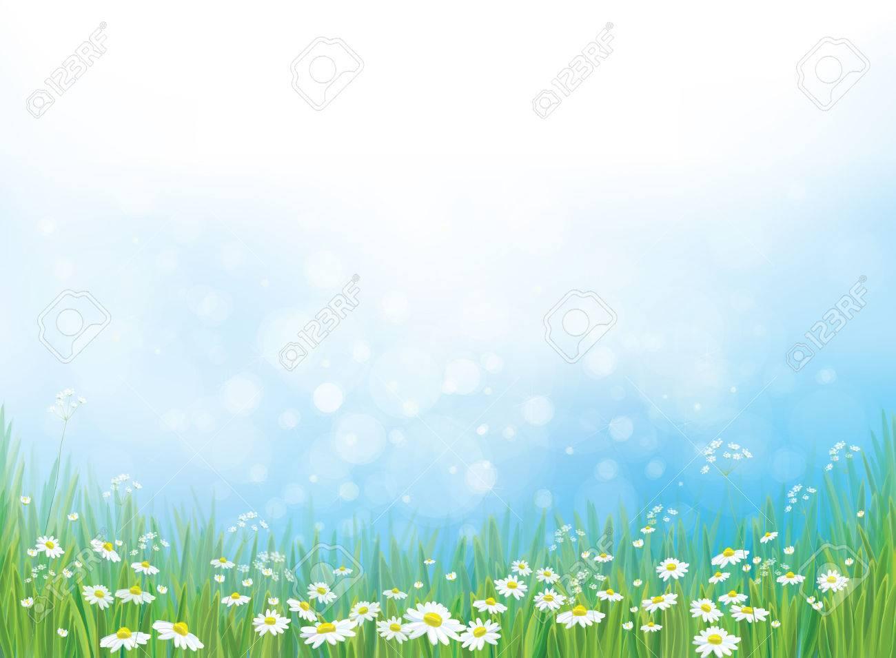 nature background, white daisy flowers on blue bokeh background. - 59120604
