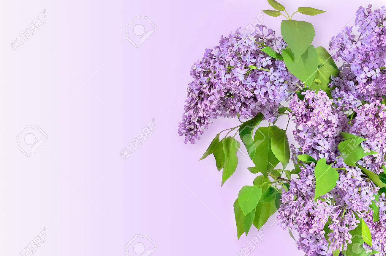 Beautiful Floral Spring Background With Lilac Flowers Bouquet ...
