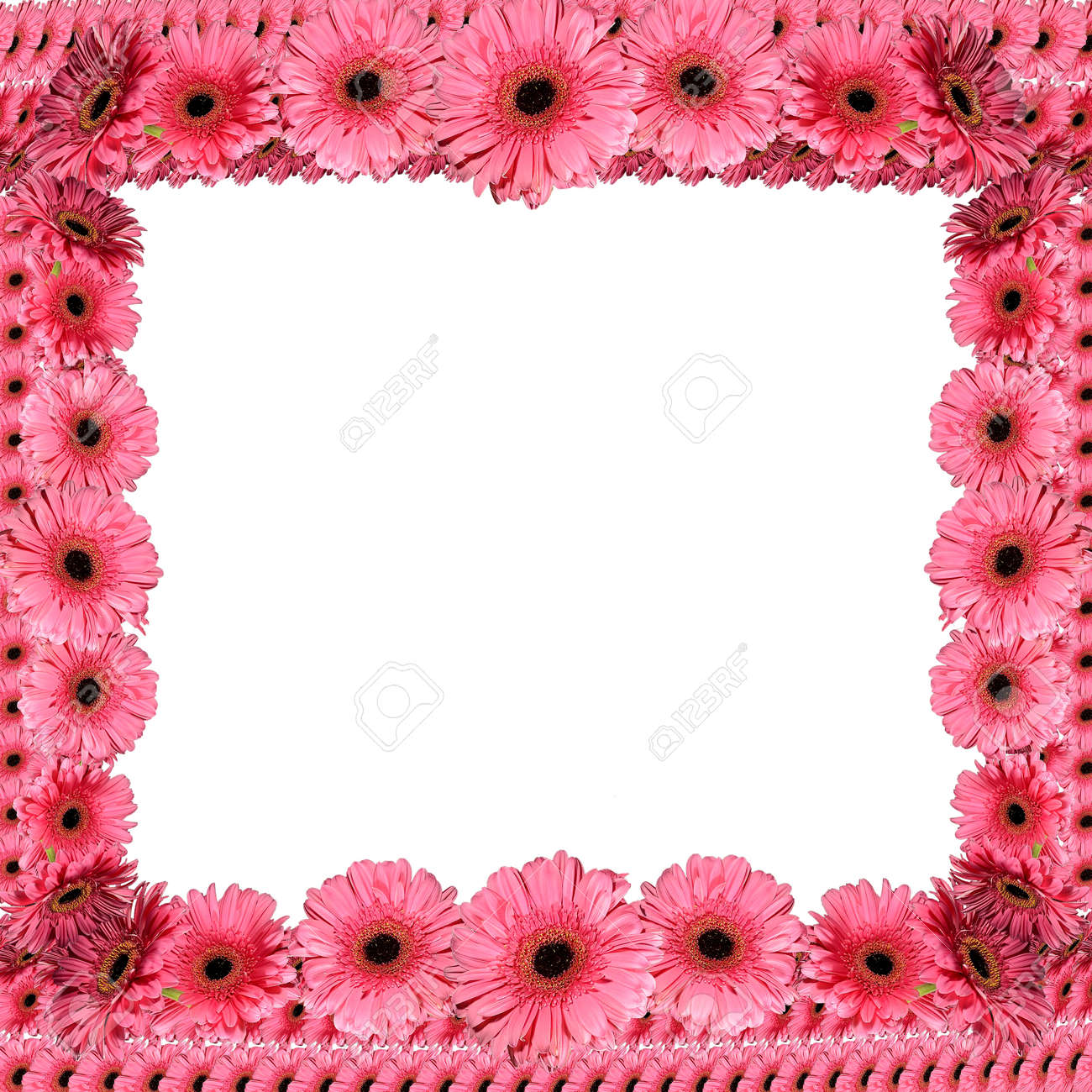 Pink Floral Frame From Gerbera Flowers On A White Background Stock