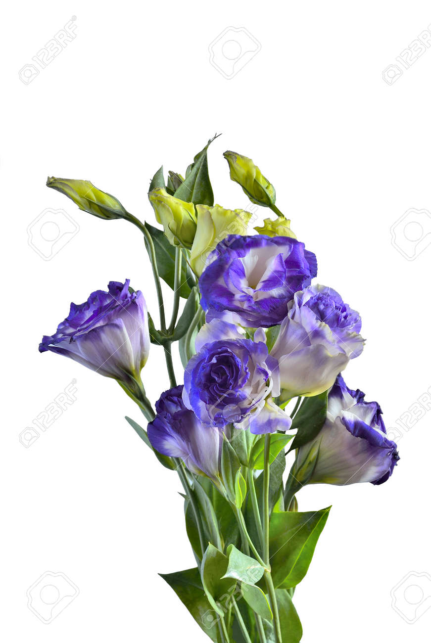 Bouquet of purple with white eustoma lisianthus flowers isolated bouquet of purple with white eustoma lisianthus flowers isolated on a white background stock thecheapjerseys Choice Image