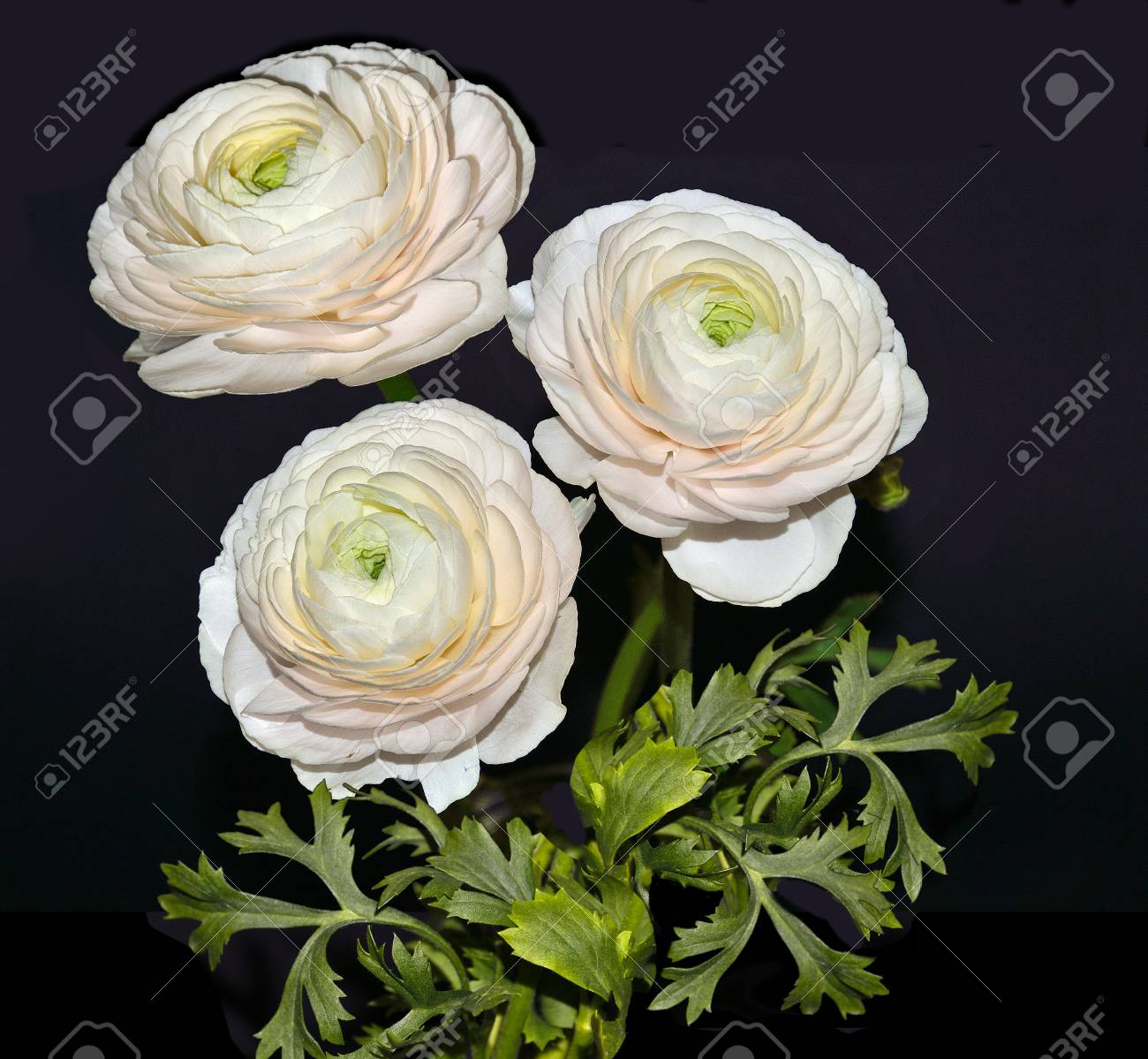 Beautiful Bouquet Of Pale Pink Ranunculus Flowers With Green Stock Photo Picture And Royalty Free Image Image 97190732
