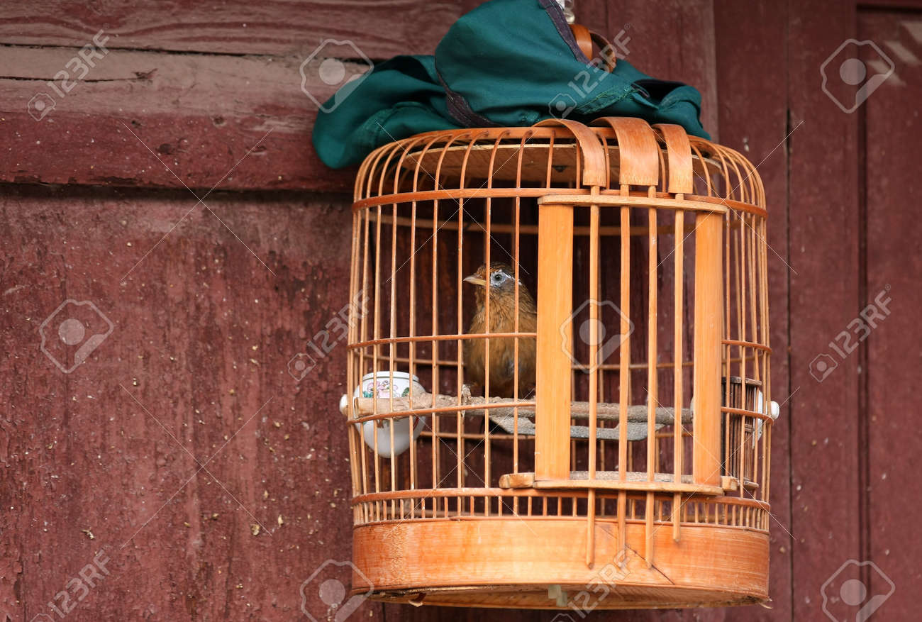 Bird locked in a wooden cage, a green cloth cover ready to wrap it, hanging over the pavement at a house door in a street of the old town Weishan, Yunnan, China Stock Photo - 14976654