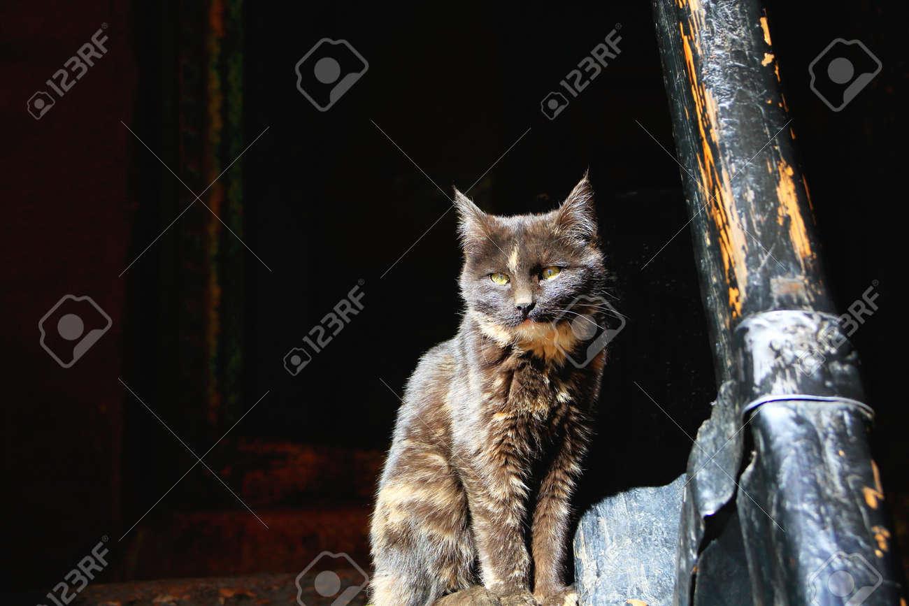 Sombre Chat Observé Aux Cheveux Jaune Sous Le Soleil à L\'intérieur ...