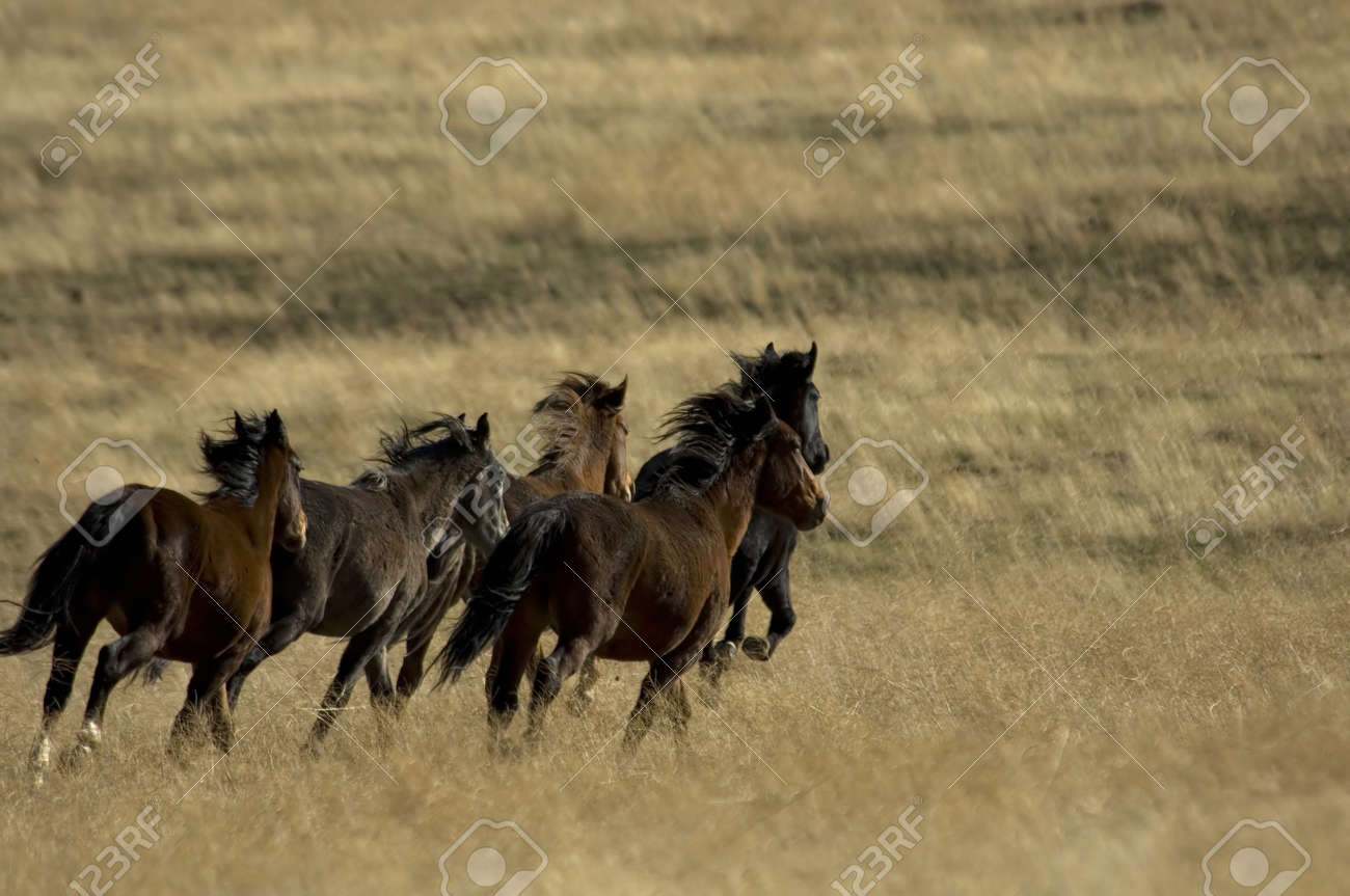 Wild Horses Running Away Stock Photo Picture And Royalty Free Image Image 941530