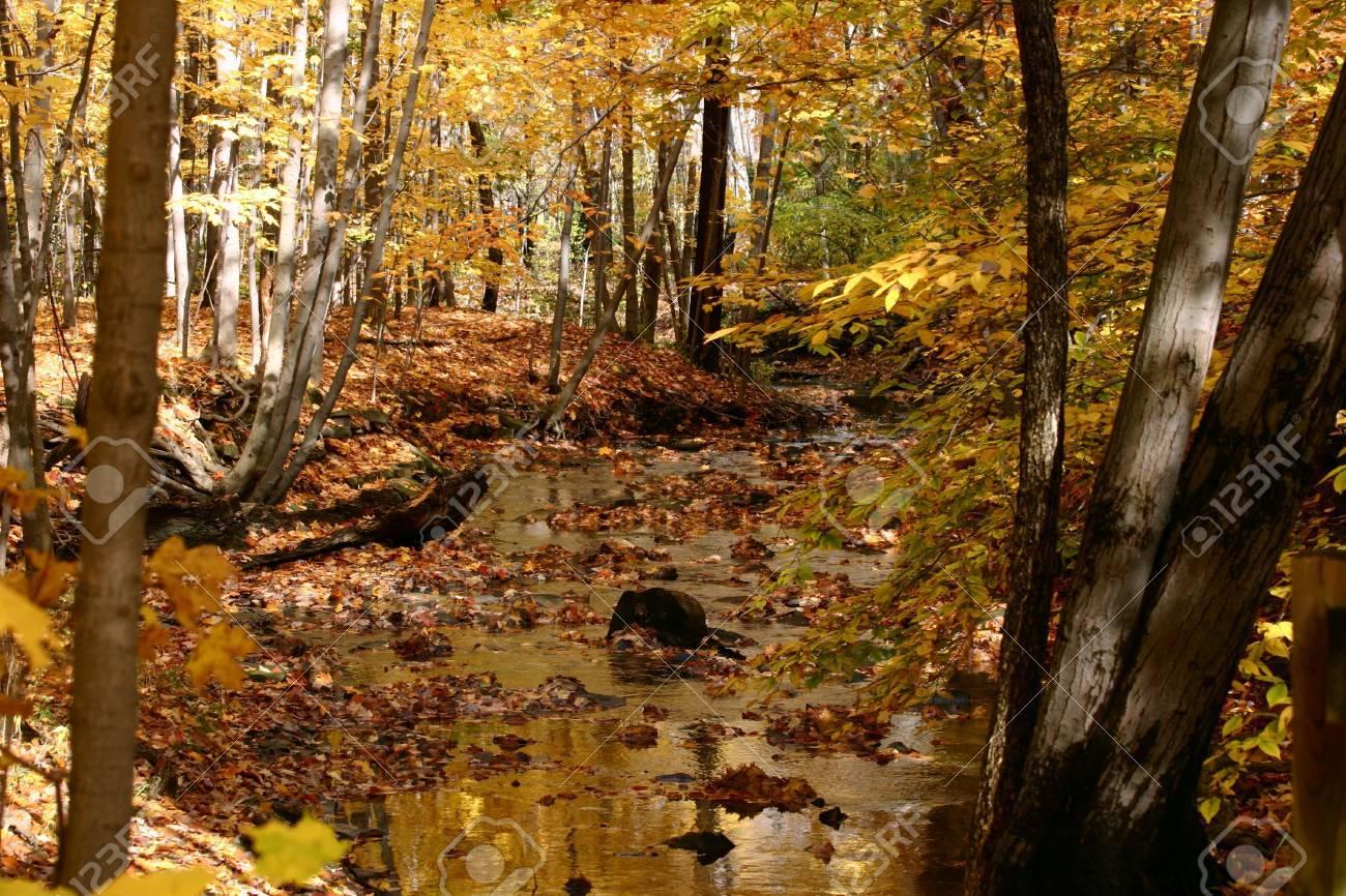 Golden Autumn Stream Stock Photo - 361860