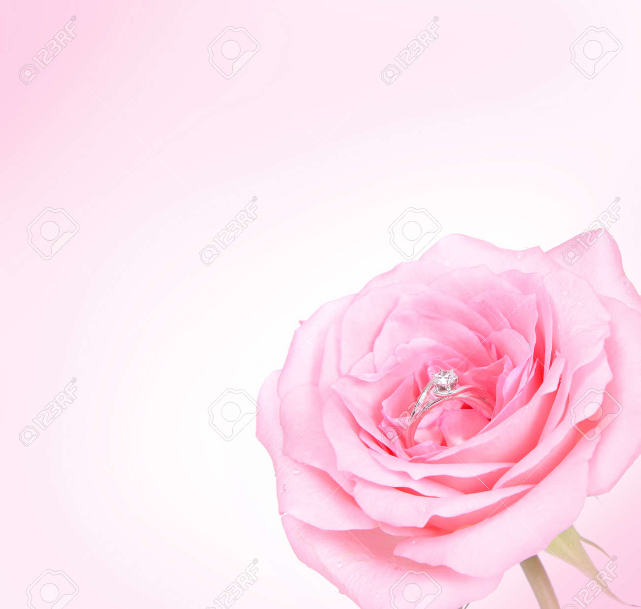 Beautiful Romantic Pink Rose With Diamond Wedding Ring On Pink ...
