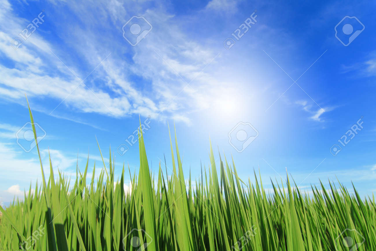 green grass, blue sky, white cloud and sun Stock Photo - 13577930