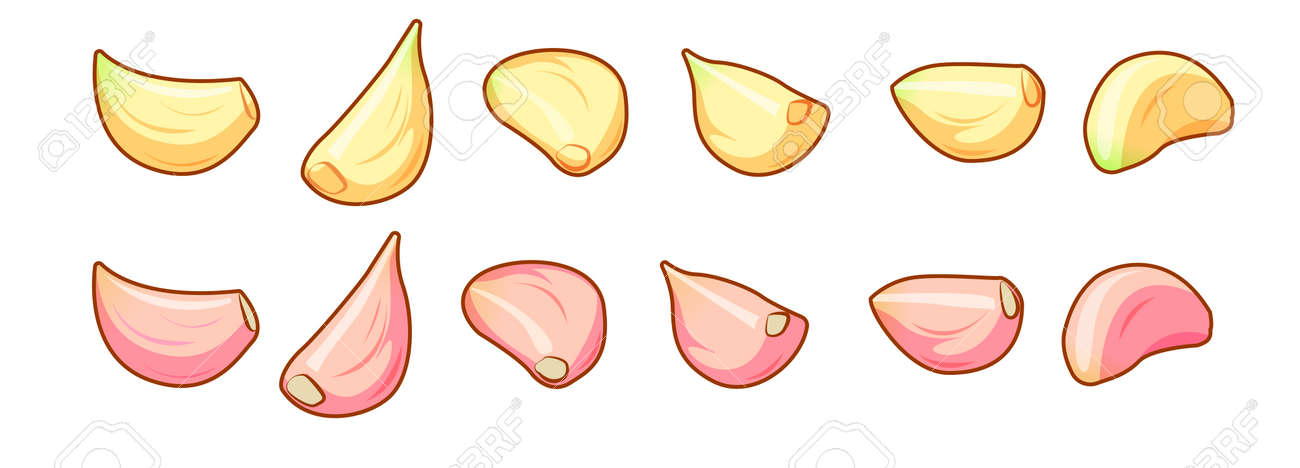 Set of peeled and unpeeled raw garlic cloves isolated on white background front isometric view. - 120738335