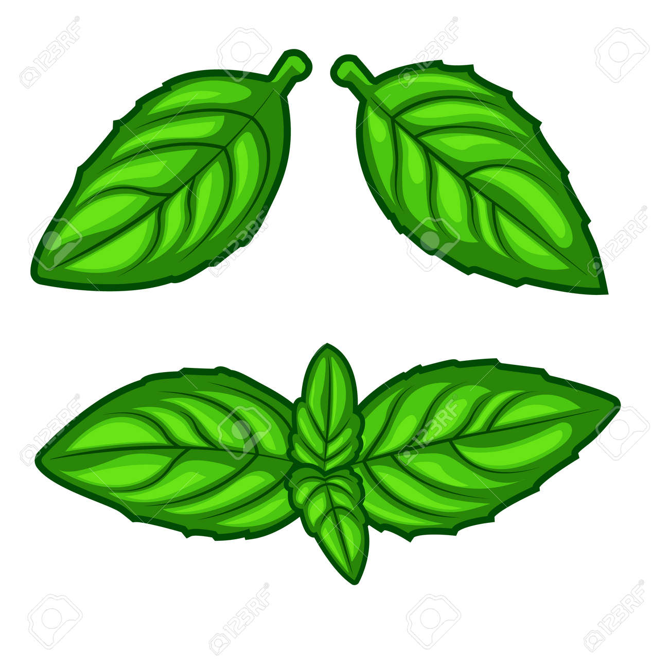 Fresh green basil herb leaves isolated on white background. Top view. Food background. - 120605870